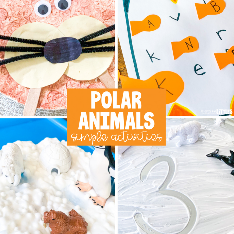 polar-animal-activities